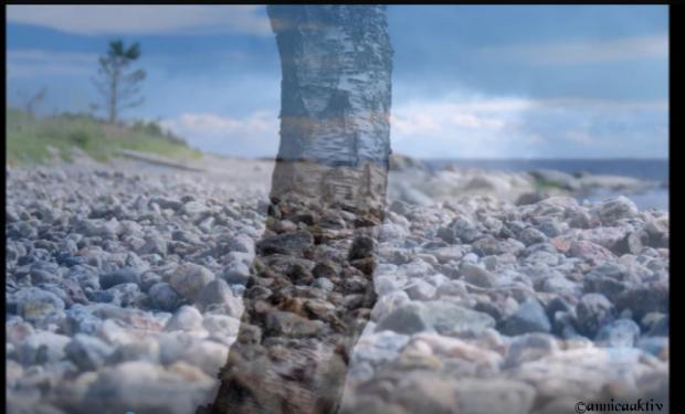 Björk och hav (2)